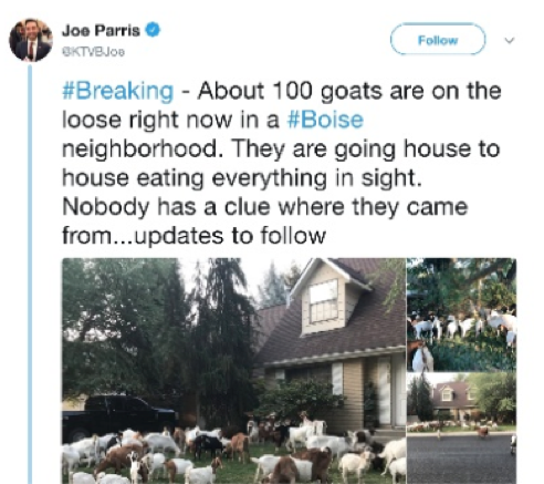 Image of Joe Parris @KTVBJoe tweet about 100 goats on the loose in a #Boise neighbourhood on 3rd August 2018
